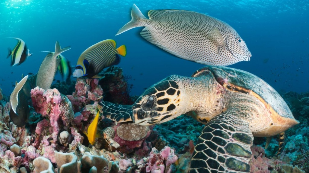 coral-reef-reef-fish-diving-zanzibar-1240x698.jpg